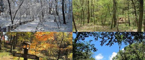 狭山緑地の四季折々の風景